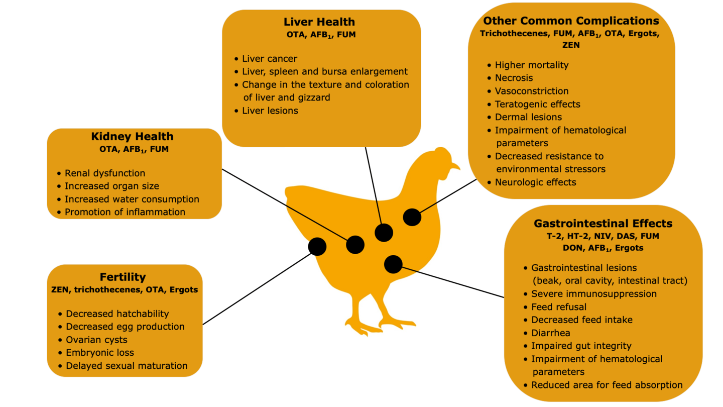 Effects of Mycotoxins in Poultry