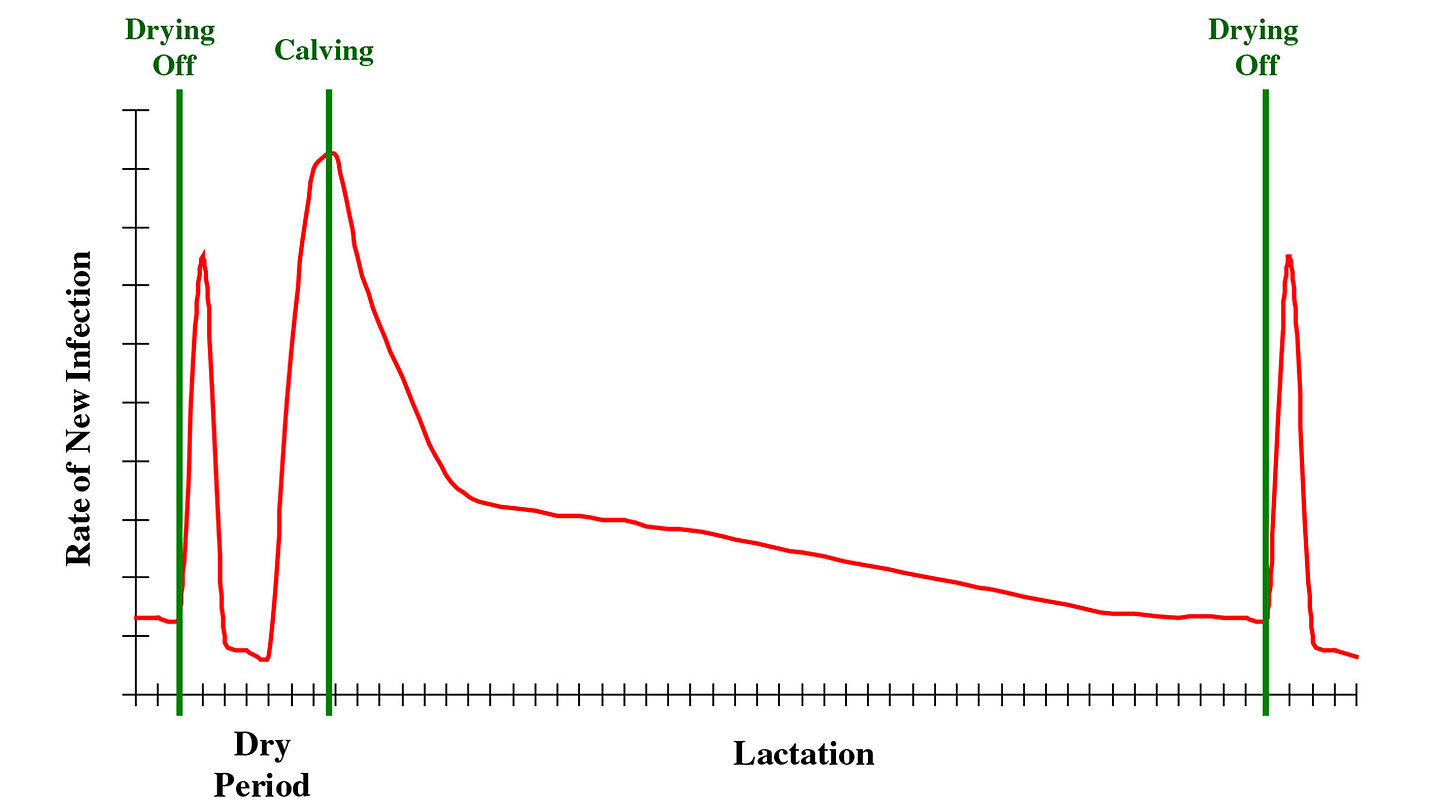 incidence of new intramammary infection during the lactation cycle.