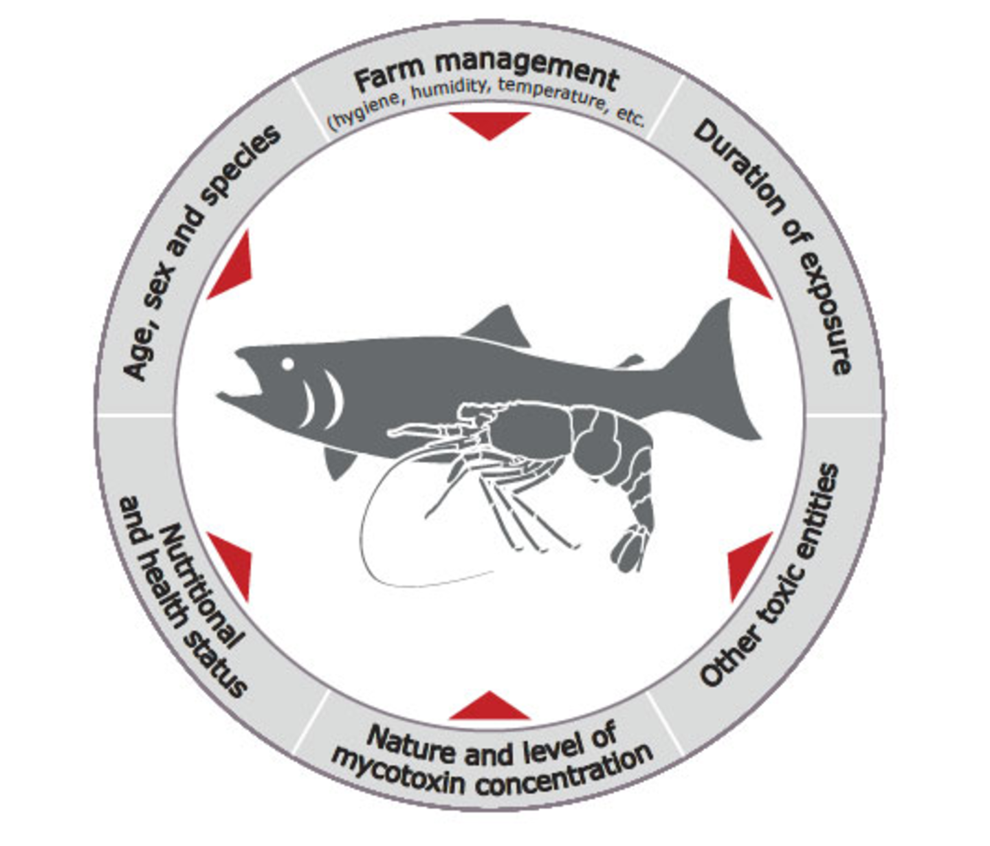 Figure 1. Interacting factors influencing the effects of mycotoxins in fish and shrimps | Source: BIOMIN