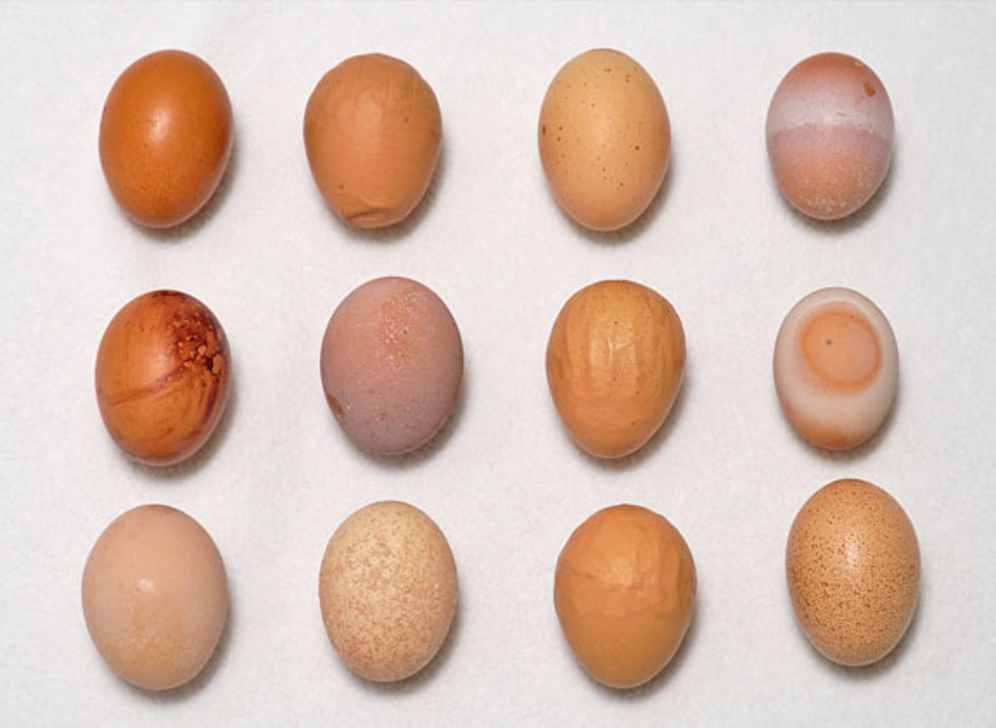 Alteration in egg shells under a high natural contamination of ZEN