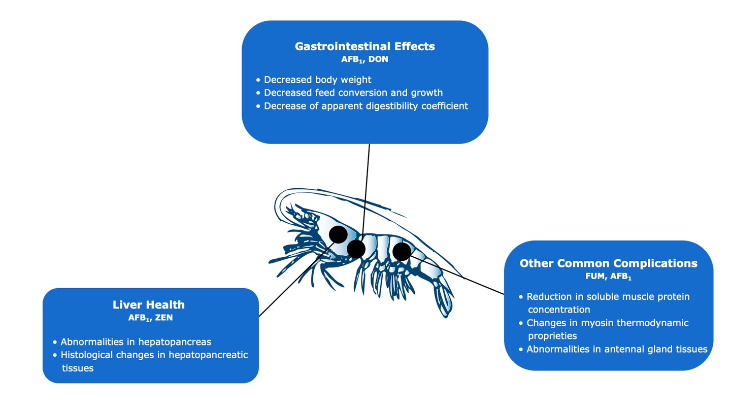 Figure 3. Effects of mycotoxins in shrimp | Source: BIOMIN