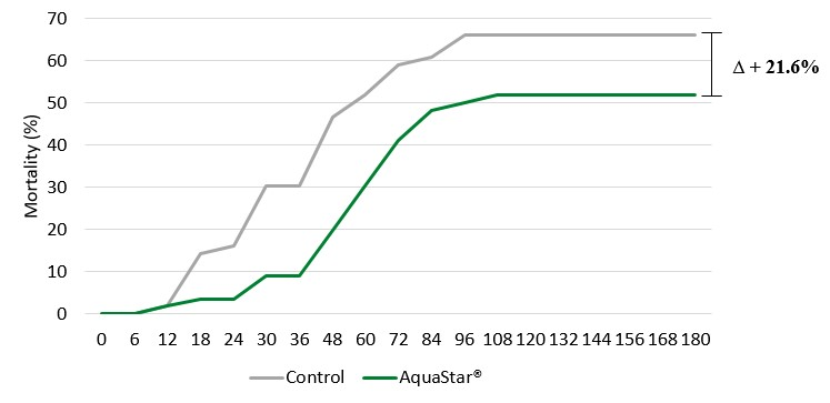 Figure 2: Mortality of shrimp fed control (grey) or AquaStar® (green) diets after a V. parahaemolyticus immersion challenge